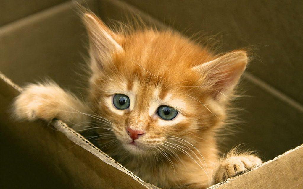 Fondo de gatito en una caja