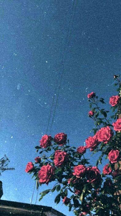 Rosas al cielo