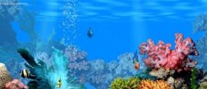 20081109-6726-aquario