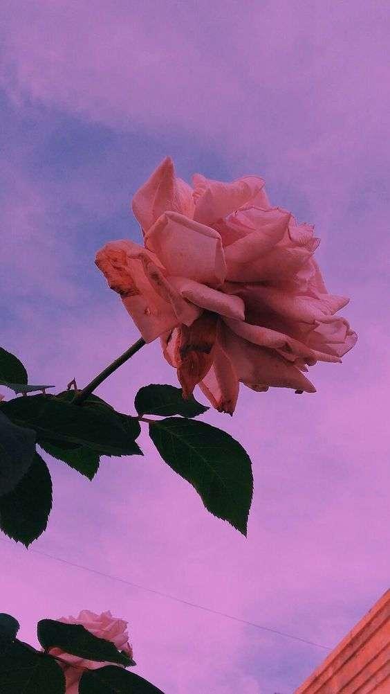 Fondos de pantalla de flores Tumblr