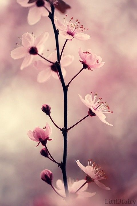 Fondos de pantalla de flores Bonitas