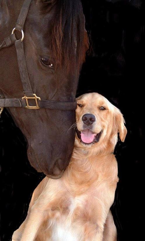 Fondo para Whatsapp de caballo