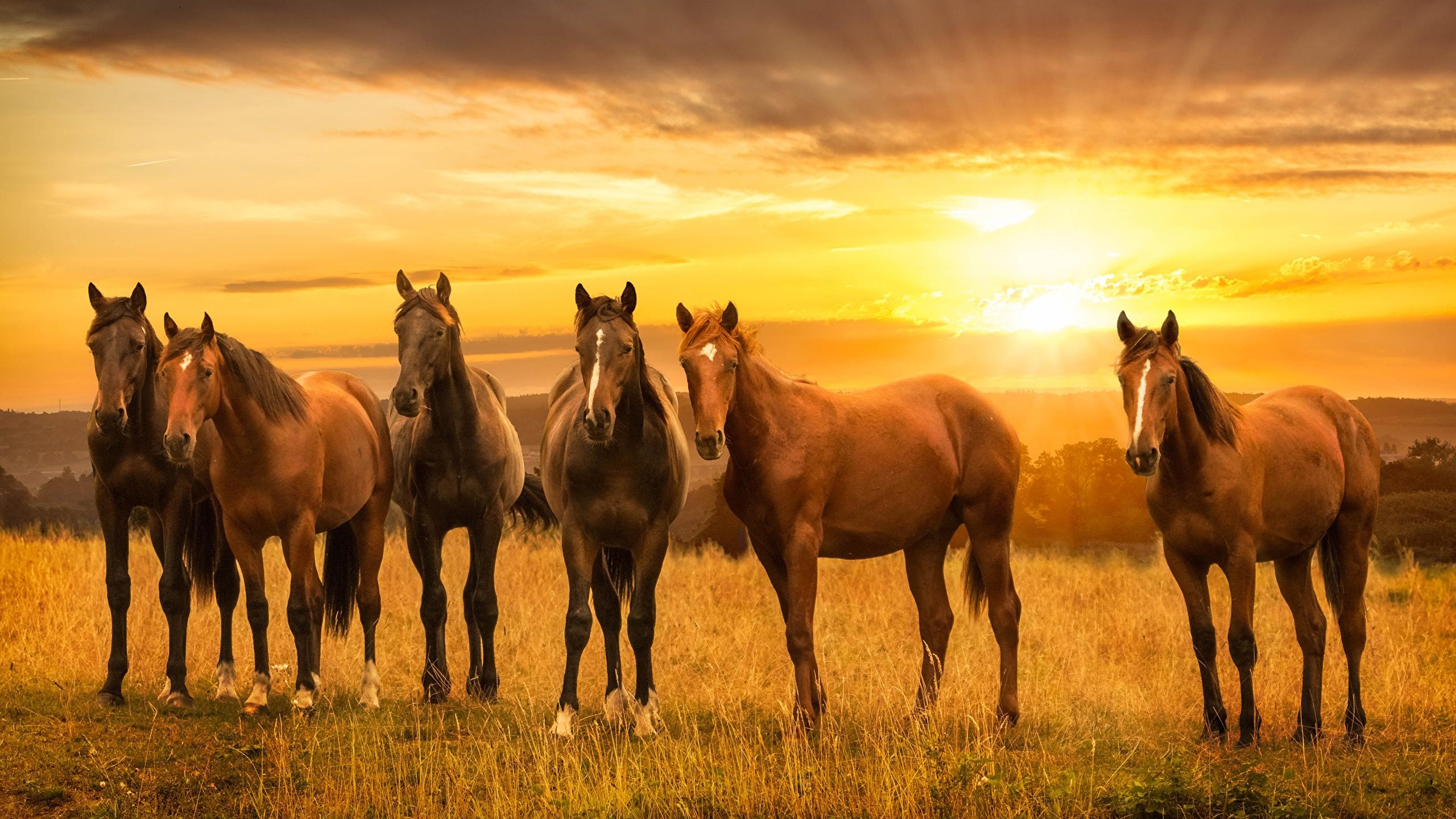 Wallpaper caballos en el atardecer
