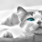 fondos de gatos para celular