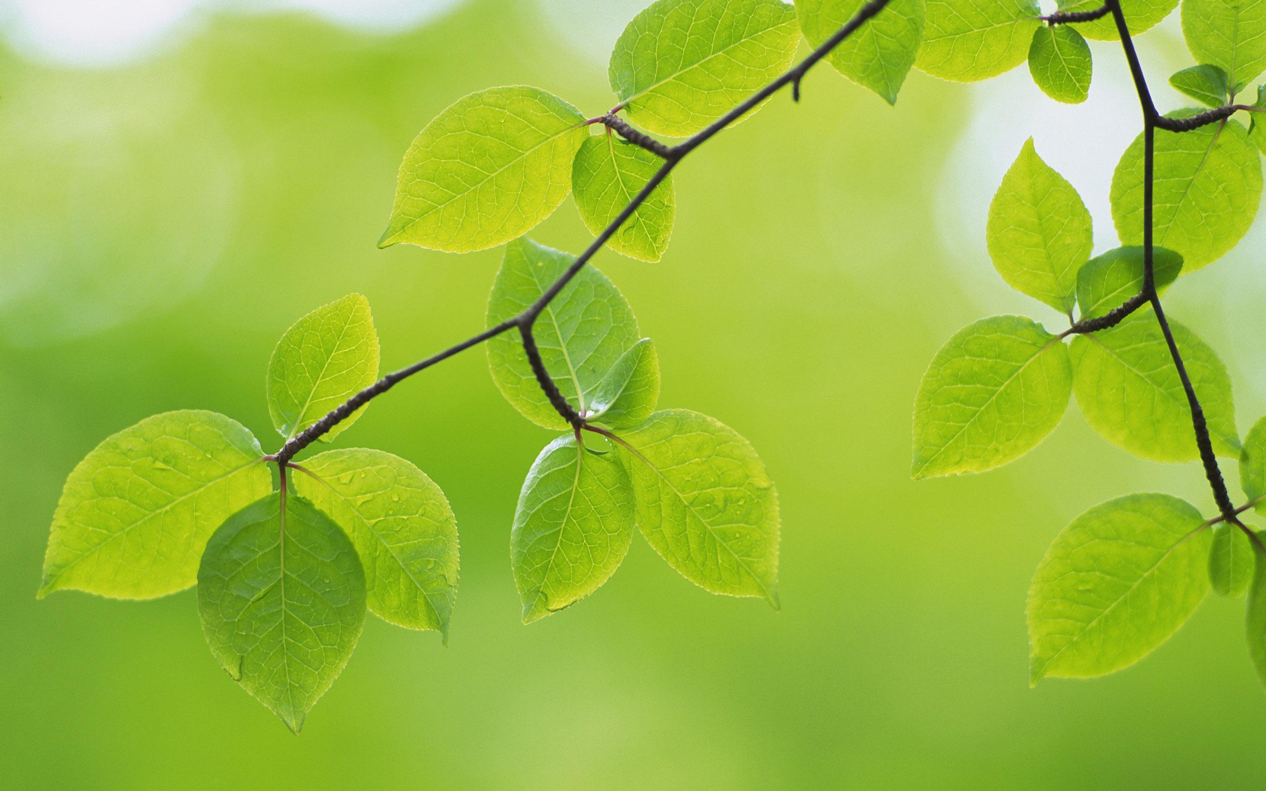 Fondos de pantalla de hojas