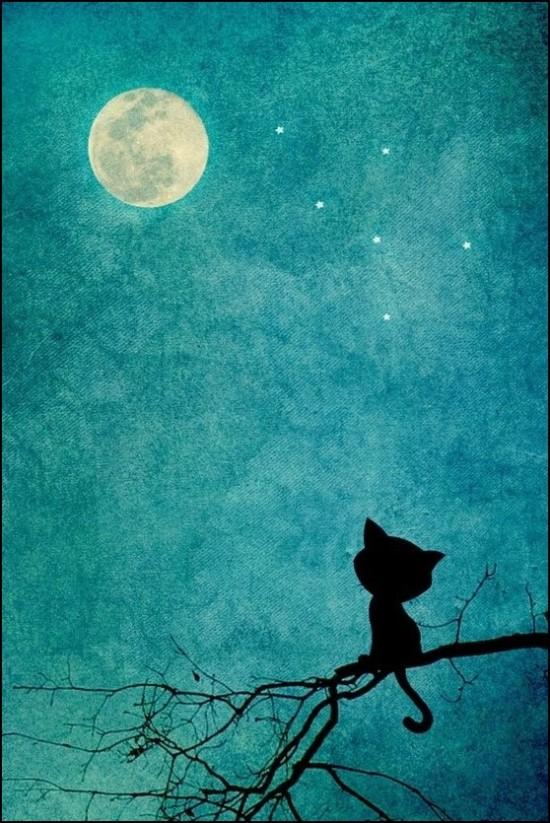 Gato viendo la luna