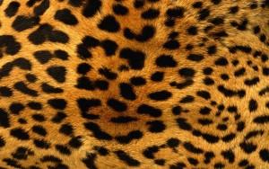 Piel-de-Leopardo-674