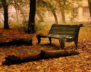 autumn-14