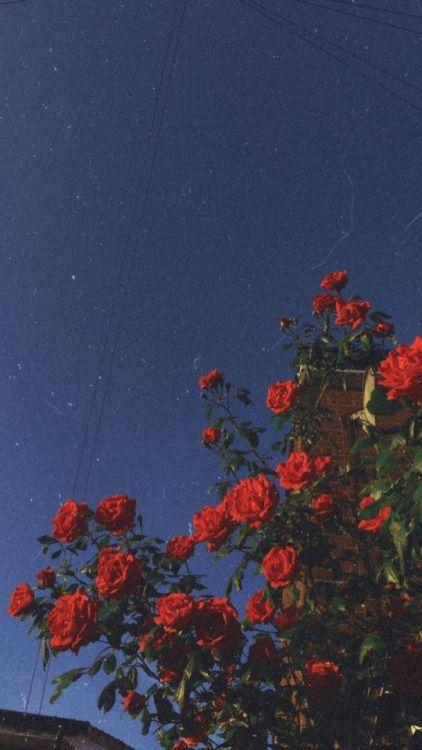 Fondos de pantalla de flores Aesthetic