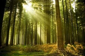 fondos de bosques para fotos