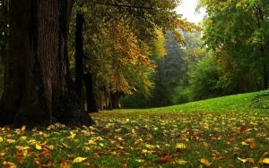 fondos de bosques hd