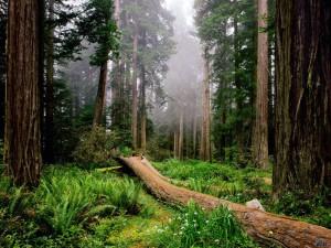 fondos de bosques encantados
