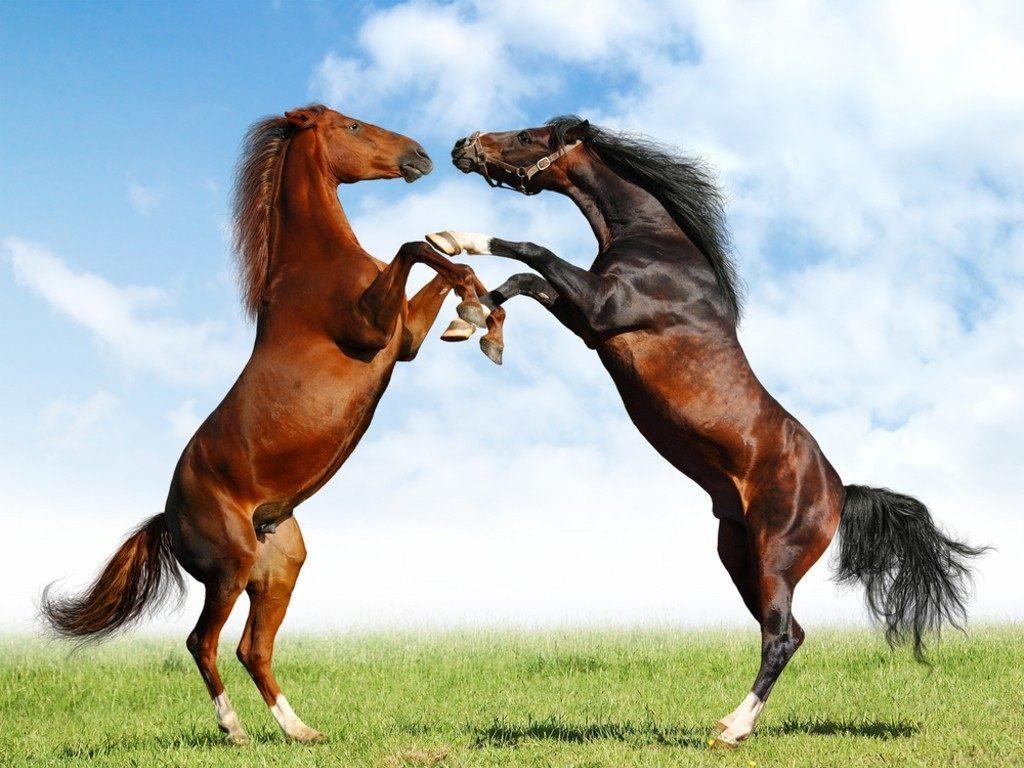 Fondo de pantalla caballos galopando