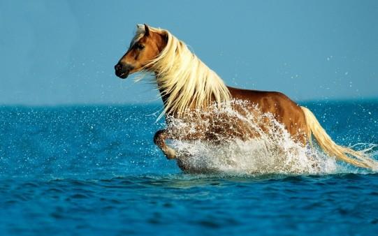 Fondo de pantalla caballo libre en el agua