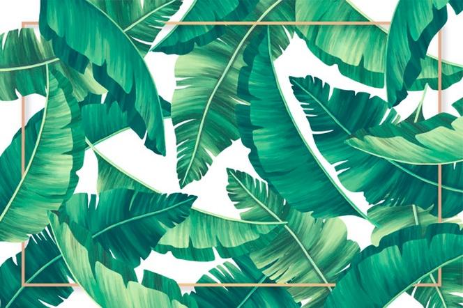 fondo de pantalla hojas tropicales
