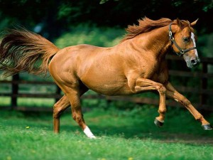fondos de caballos gratis