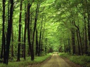 fondos de bosques oscuros