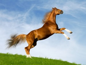 fondos de caballos animados