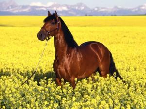 fondos de caballos para fotos
