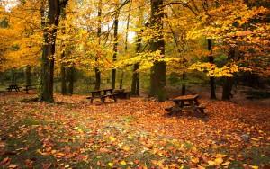 fondos-de-pantalla-de-otoño-hojas-caer