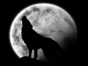 fondos-dibujos-lobos-1024
