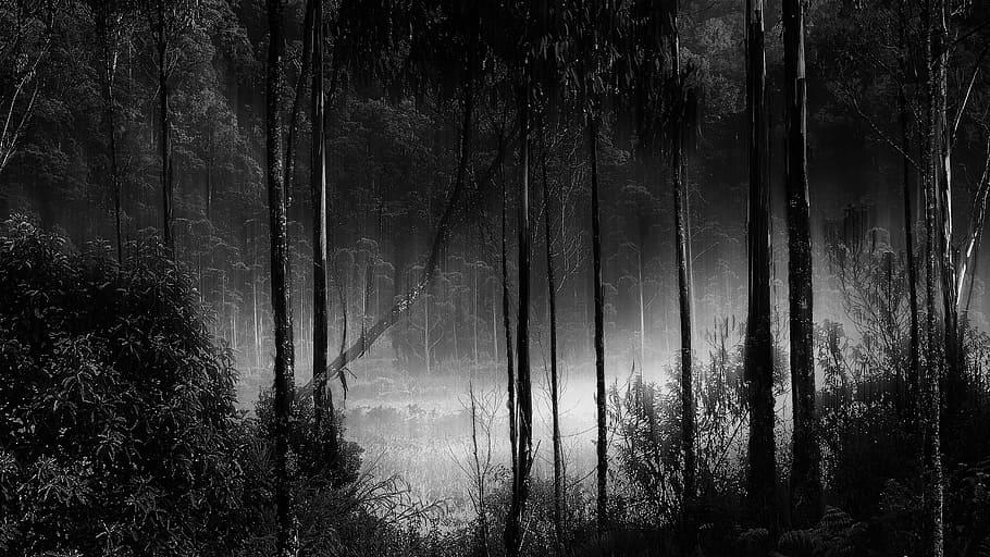 Imagen de bosque lluvioso