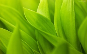 hojas-verdes-macro-7912