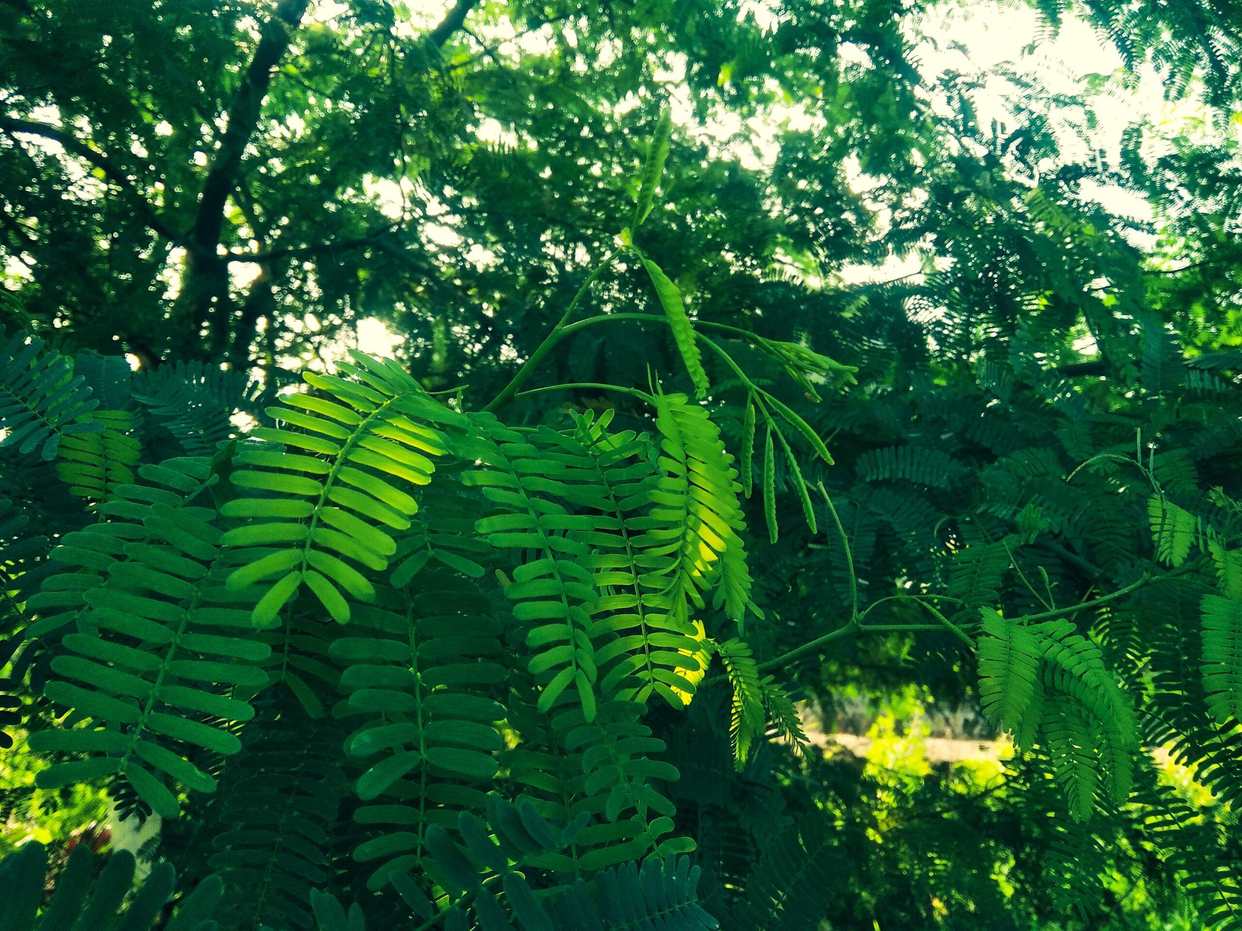 fondo hojas verdes