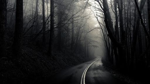 Fondo de bosque oscuro