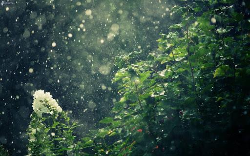 Fondo de hojas con lluvia