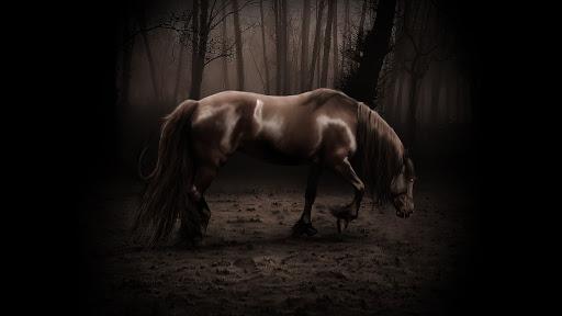 Fondo oscuro de caballo