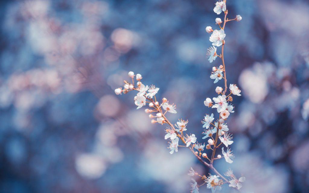 fondos de pantalla tumblr flores
