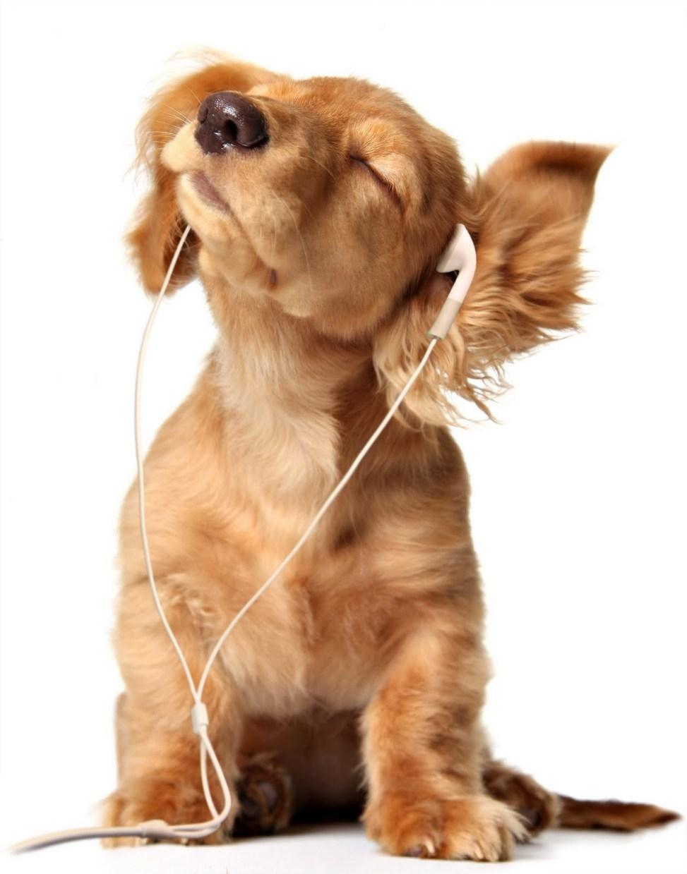Imagen de perro escuchando musica feliz