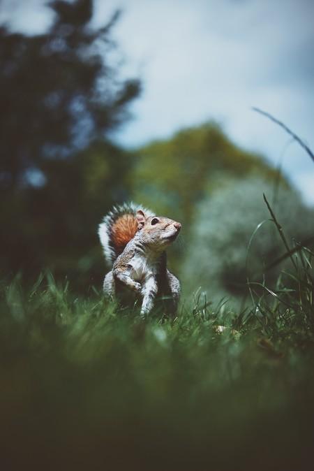 Fondo de una ardilla en el bosque al estilo tumblr