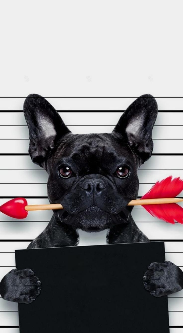 Fondo de perro en estilo tumblr