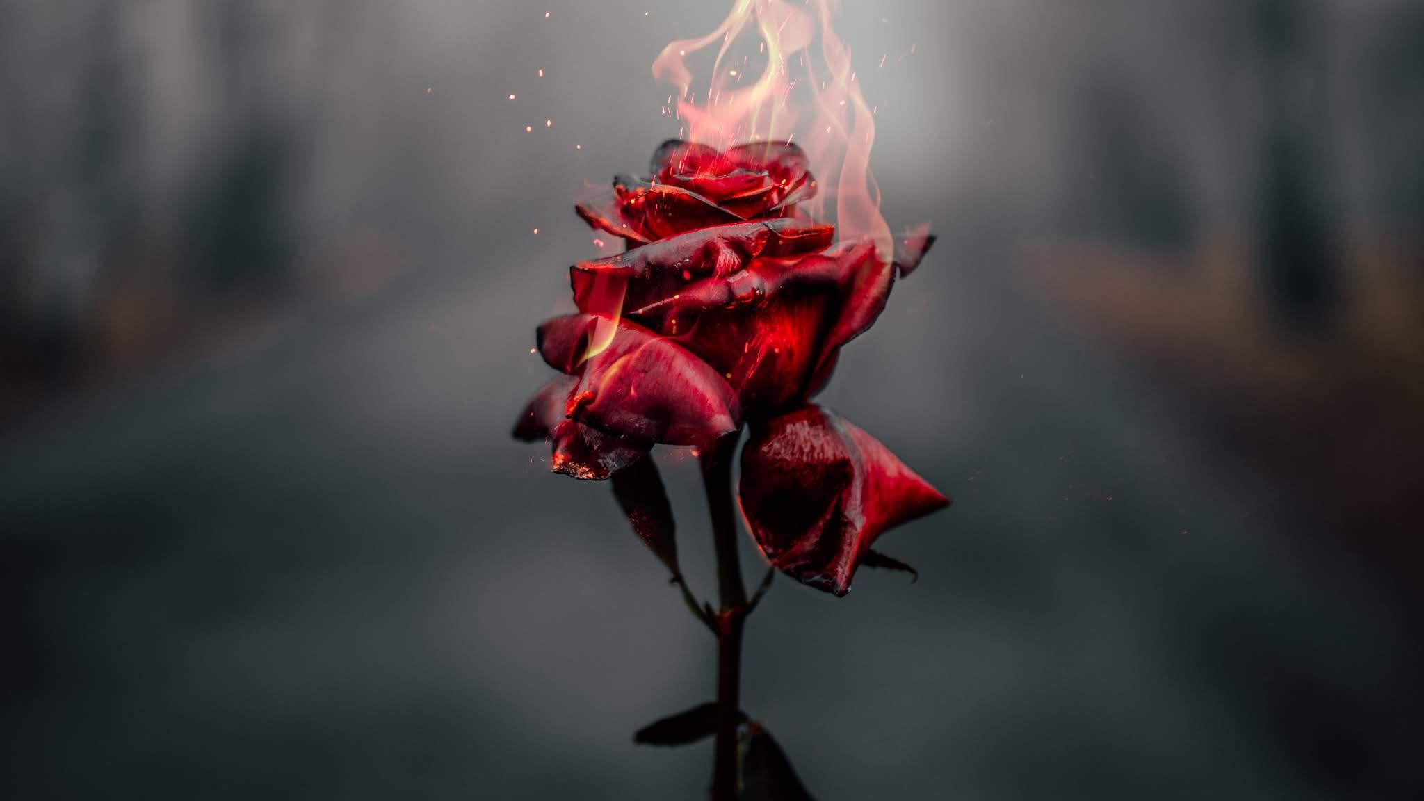 Rosa en llamas HD