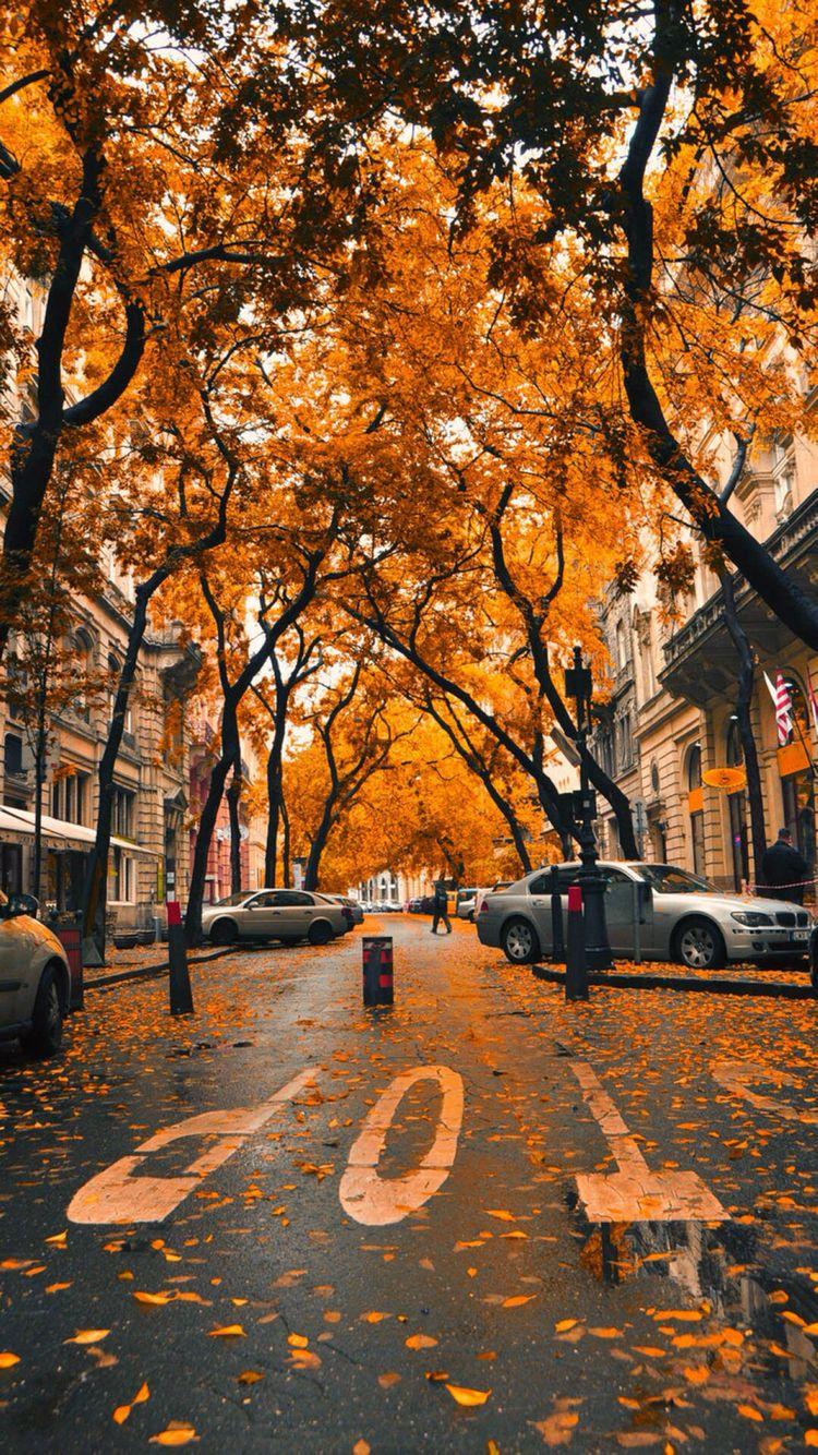Fondo de pantalla otoño