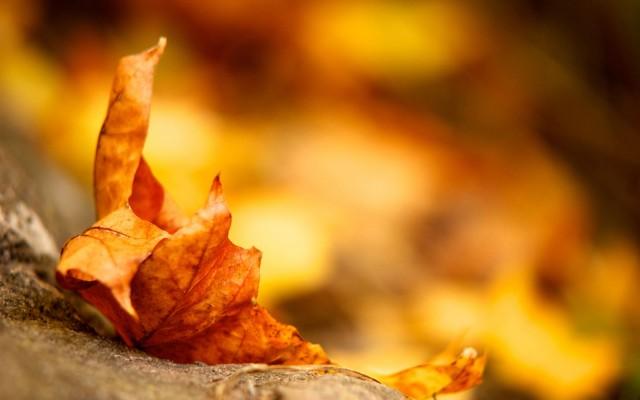wallpapers otoño gratis