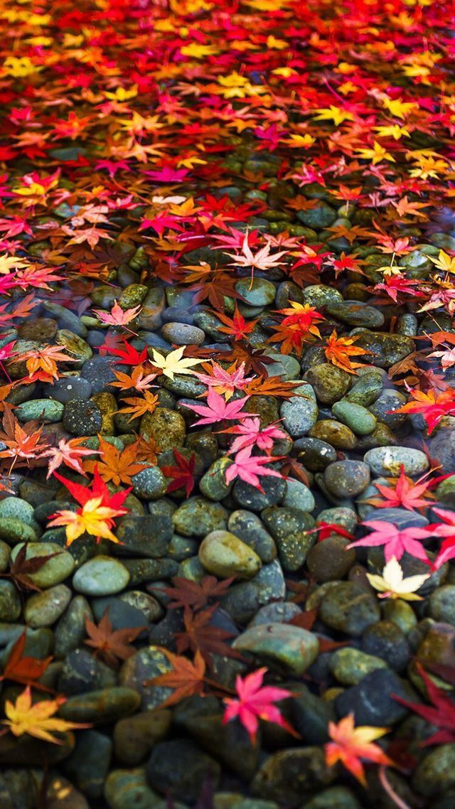 HD otoño