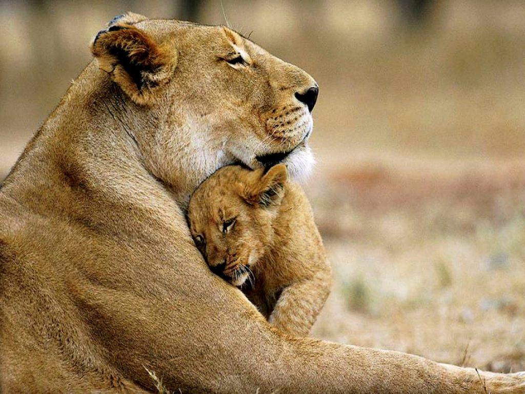imágenes de madres e hijos animales