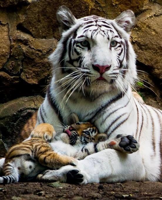 imagenes de madres e hijos animales