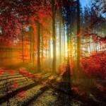 wallpapers de otoño hd