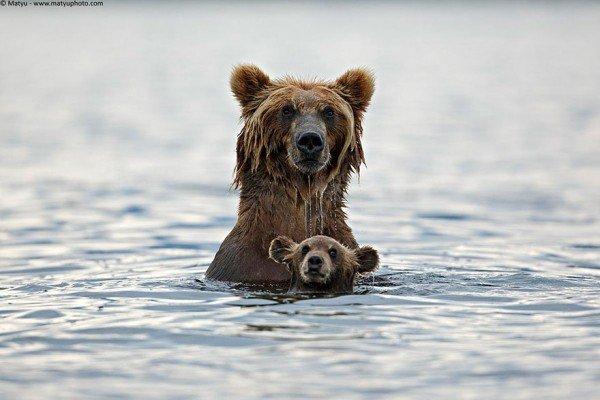 fotos animales madres e hijos