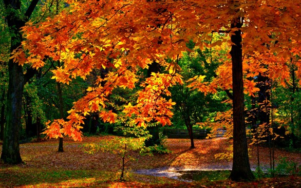 wallpapers full hd otoño