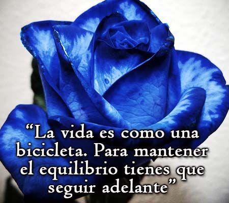 Frase con rosa Azul