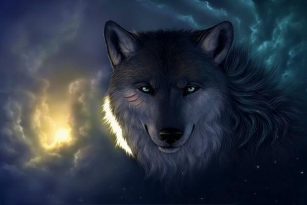 Fondos de lobospara twitter