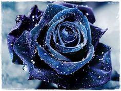 Rosa con brillos azules