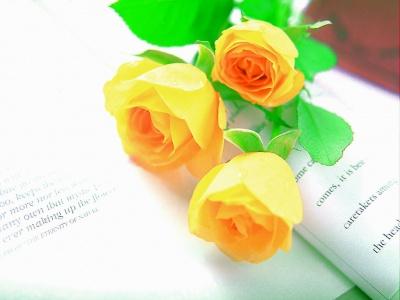 fondos de pantalla de rosas amarillas gratis