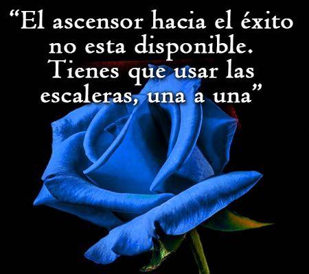 Rosa azul con frase