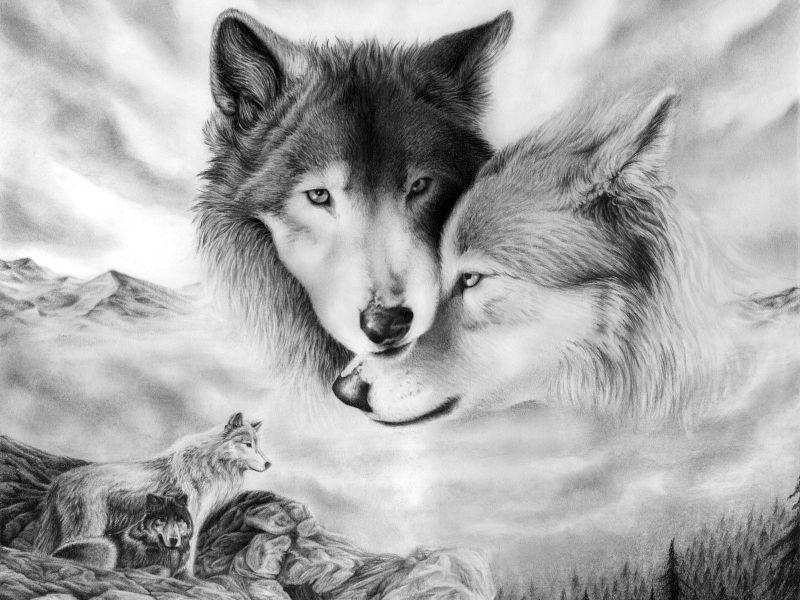 fondos de pantalla de lobos hd